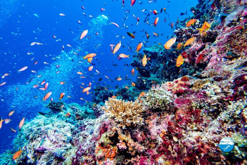 Red Sea Diving Heaven Saphir